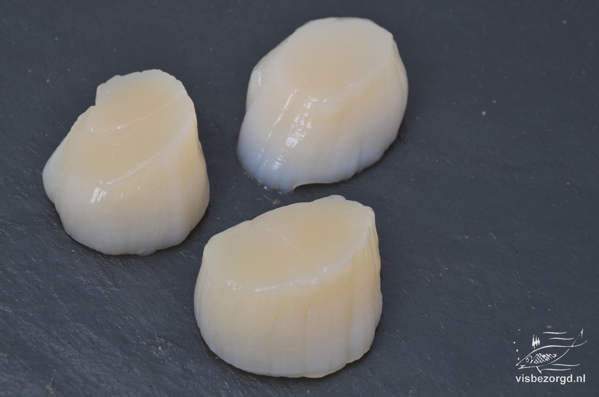 Coquille vlees