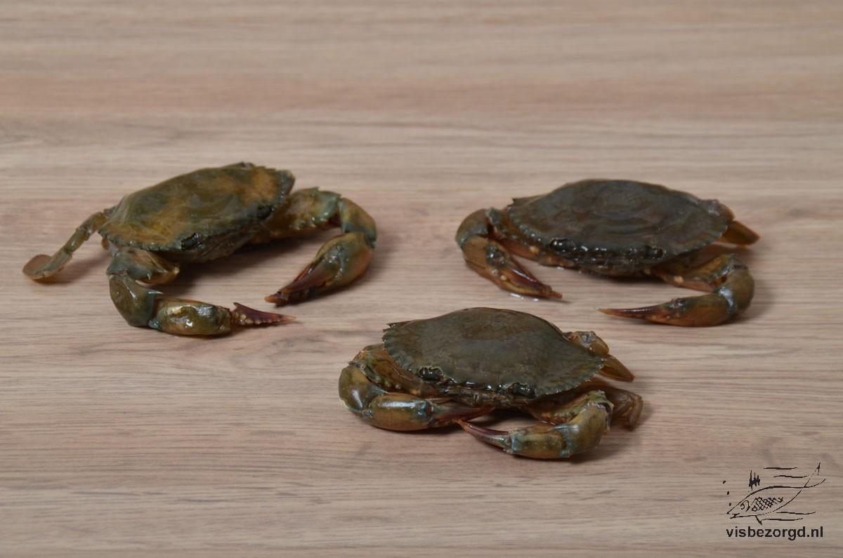 Crab Soft Shell
